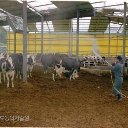 구제역등 가축전염병을 방제하기 위해 젖소 사육장을 소독하고 있다.
