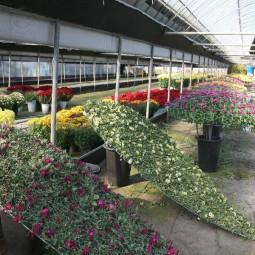 국화를 이용하여 다양한 작품을 제작하여 국화재배농가