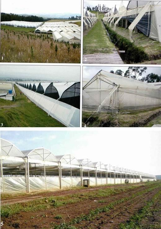 사진 1. 전형적인 남미 온실형태, 잦은 비로 구배가 큼. 빗물은 배수관을 통해 배수로로 유도 1,2,3-에콰돌; 4-콜롬비아; 5-브라질