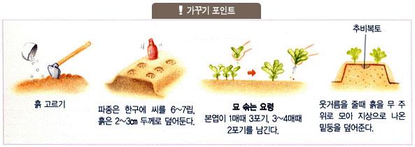 가꾸기포인트: 흙고르기, 파종은 한구에 씨를 6~7립, 흙은 2~3㎝ 두께로 덮어둔다, 본엽이 1매때 3포기, 3~4매때 2포기를 남긴다. 웃거름을 줄때 흙을 무 주위로 모아 지상으로 나온 밑둥을 덮어준다.