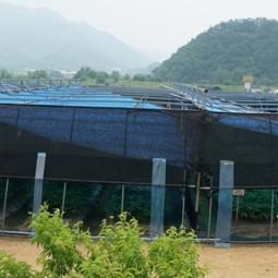 13. 인삼 광폭경사식해가림 재배(2017)