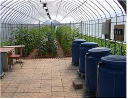 시설재배 비닐하우스내 염류집적 토양 모습