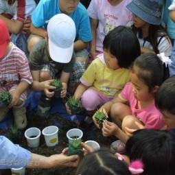 농업기술원에서 실시한 어린이를 위한 농사체험학습에 참여한 초등학교 1학년 학생들이 화분에 선인장을 심고 있다.