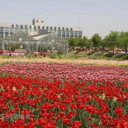 평택시농업기술센터내에서의 꽃 축제